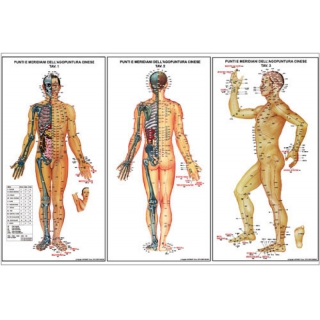 Chart of acupunture and meridian points
