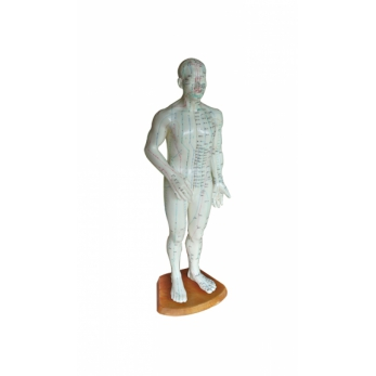 Whole body model 50 cm