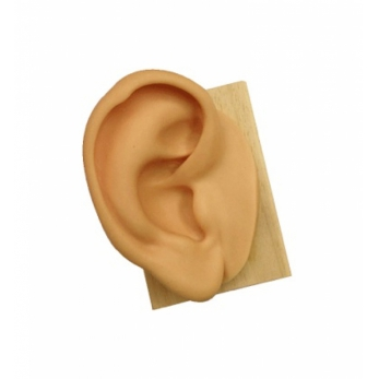 Ear in soft silicone - height cm. 15 - right