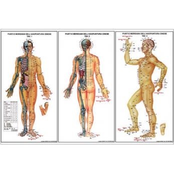 Mini charts of acupuncture and meridian points